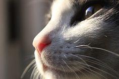 Katze, Bart, Katzen, Tier, Häuslich