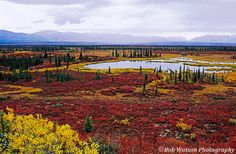Tundra Pond - - A pond on the tundra along the Denali Highway surrounded by the splendor of fall colors, Alaska by Bob Watson