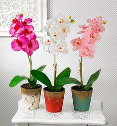 http://casepractice.ro/cum-ingrijesti-corect-orhideea-ce-sa-faci-ca-sa-infloreasca-des/