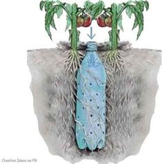 4. And More Self-Watering...