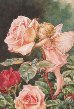 Illustration for the Rose Fairy from Flower Fairies of the Summer. The Rose fairy was first published in Flower Fairies of the Garden, Author / Illustrator Cicely Mary Barker Cicely Mary Barker, Fairy Dust, Fairy Land, Fairy Tales, Fantasy Kunst, Fantasy Art, Fantasy Magic, Fairy Garden Plants, Fairy Gardens