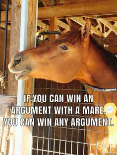 Life with a mare . Funny Horse Memes, Funny Horses, Chestnut Mare, Mare Horse, Barrel Racing Horses, Horse Quotes, Equestrian, Poppies, Pony