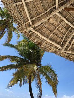 Wallpaper / Paradise / beach, palms, blue sky No filter heaven on earth