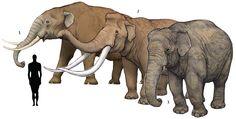 1. Mastodon americanum 2. Palaeoloxodon naumanni 3. Elephas maximus