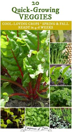 The quick-growing veggies, mostly leafy greens, are ready from seed to harvest in just 4-6 weeks and perfect for cool weather growing in spring and fall.