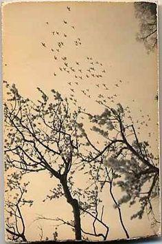Masao Yamamoto - Fotografía y poesía - Photography & Poetry - Photo & Poésie