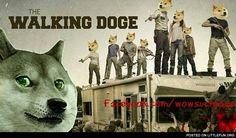 The Walking Doge
