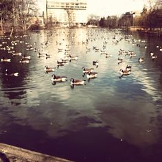 South side of UMass Amherst duck pond