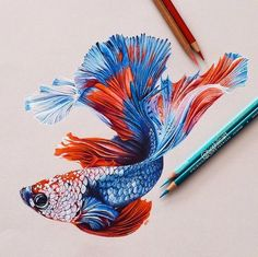 Fish Color Pencils Drawing Gold Fish - A Realistic Drawing With Simple Colored Pencils Fish Drawings, Realistic Drawings, Colorful Drawings, Animal Drawings, Cool Drawings, Beta Fish Drawing, Kawaii Charms, Carpe Koi, Color Pencil Art