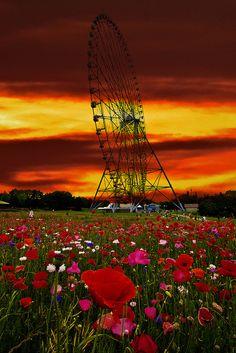 Poppy Field Ferris Wheel, Japan