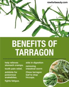 Herbs and spices to include in a paleo diet tarragon
