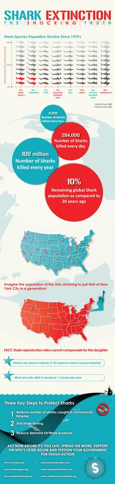 woah! another shocking infographics on shark extinction from surfmeisters.com