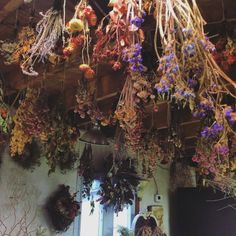 Drying herbs and flowers from the ceiling for home Apothecary. Wiccan, Magick, Witchcraft, Pagan Witch, Witch Cottage, Witch House, Herb Farm, Witch Aesthetic, Kitchen Witch