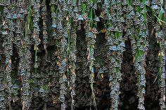 Ingo Arndt  centenas de mariposas   Localização: Rhodes, Grécia