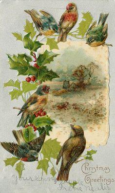 Merry Christmas Birds