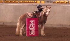 """When this little barrel racer goes sliding off the side of his pony, he pulls himself back on, completes his pattern and even throws in a little """"look ma, no hands!"""" moment on the gallop home. #likeaboss"""
