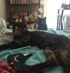My friend's cat is suspicious of her newly adopted doppelgänger roommate. [X-Post from r/aww]