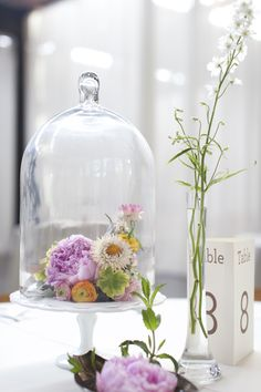 Cloche ( by amy osaba) The Bell Jar, Bell Jars, Glass Domes, Glass Vase, Simply Wedding Dress, Low Centerpieces, Centrepieces, Garden Cloche, Wedding Bouquets