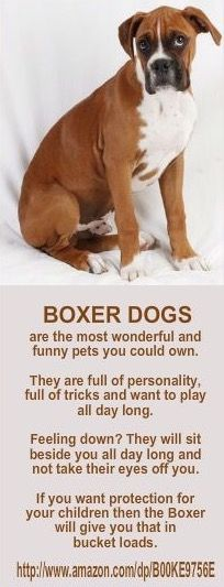Boxers are the best..