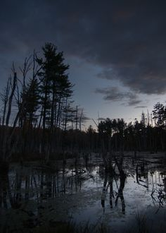 Autumn - East Douglas Photo   #Autumn #Fall #Water #Sunset #Trees