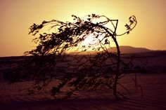 https://flic.kr/p/KmjK1o | Dunas de Corralejo-Corralejo dunes. Fuerteventura Island