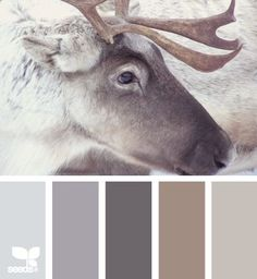 Rustic Colors, winter color scheme