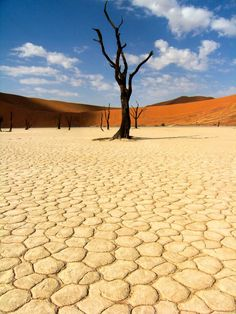 'Namibia - Deadvlei' by adriennexplores Provinces Of South Africa, What A Beautiful World, Mood Colors, Top Place, Africa Fashion, Wonders Of The World, Safari, Landscapes, Ocean
