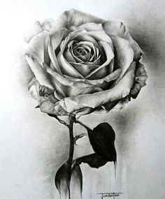 I like this drawing because I love the different shades, like some shades are darker than the others. Also, the way the rose has some highlights that make the rose more realistic. Obviously it doesn't have color, but that's what I like more about this drawing and the way they turned a simple rose to a realistic detailed drawing. -Jimena Saldaña