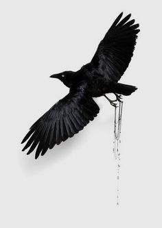Artist Julia de Ville makes exquisite jewelry, emotive taxidermy sculpture and speaks with Claire Bridge for Art world Women about animal rights, meditation, Raven Art, Crows Ravens, Animal Rights, Fantastic Beasts, Taxidermy, Spirit Animal, Art World, Art Tutorials, Book Art