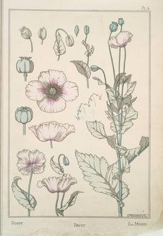 Pavot Creator(s): Grasset, Eugène, 1841-1917 -- Compiler  Verneuil, M. P. (Maurice Pillard), 1869- -- Artist