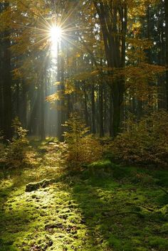 Saxony Anhalt, Deep Forest, Autumn Forest, Backyard Projects, Backyard Gym, Forest Landscape, Next At Home, Nature Pictures, Woodland