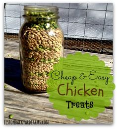 Cheap & Easy Chicken Treats - A Great Project for Kids - http://www.elstonbackyardfarms.com/cheap-easy-chicken-treats/