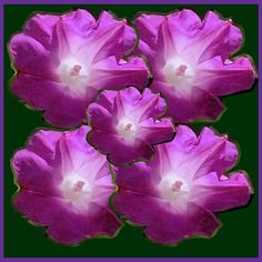Digital Graphic Exotic Flower Bouquet made of photography of Caribbean Collection of Navin joshi. Exotic Flowers, Caribbean, Bouquet, Wall Art, Digital, Purple, Galleries, Globe, Plants