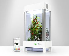 niwa urban garden is smartphone-controlled for optimal cultivation... Herb Garden