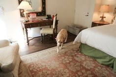 Posh & Pet Friendly: A Stay at the Four Season Biltmore Santa Barbara | My Life's a Trip