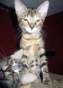 Photo bombs!  #kitty #cat #funny #cute #pet  #vet  #gentle doctor