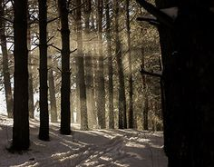 """Check out new work on my @Behance portfolio: """"Winter forest"""" http://be.net/gallery/53408695/Winter-forest"""