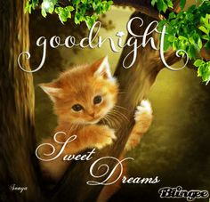 Image result for good night blingee pic