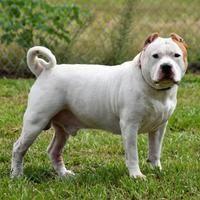 Pet Card Pet Adoption Pets Dog Adoption