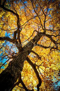 Autumn Tree Photo Gorgeous Bright Fall by PatrickRabbatPhotos