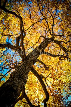Autumn Tree Photo Gorgeous Bright Fall by PatrickRabbatPhotos