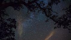 Milky Way and clouds through the trees by SamuelNesbitt