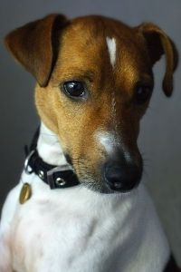 Not sure the cats would be too happy, but would love a little Jack Russell