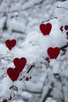 oneextrapixel:Hearts in the Snow    ❤My love for you is as unique as each little glittering snowflake.❤  ~Charlotte (PixieWinksAndFairyWhispers)
