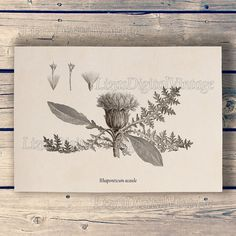 Thistle Vintage botanical wall art Thistle by LizasDigitalVintage