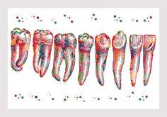 Dental Art Print Teeth Anatomy Art Teeth Row Watercolor Medical Art Teeth And Roots Molar Incisors Dentist Clinic Wall Art Dentist Art, Dentist Clinic, Dental Puns, Dental Hygiene, Dental Posters, Medical Art, Anatomy Art, Dental Health, Fine Art Prints