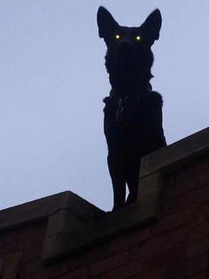 very creepy thing to have on the roof looking down
