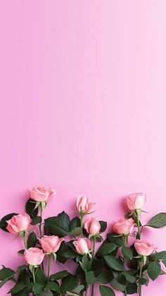 #background , #fundos , #wallpaper  , #rosa