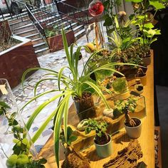 Haftanın her günü 12:30 - 20:30 arası dükkandayız, #bekleriz ☺️ #istanbul #kadıköy #moda #sutopya #teraryum #akvaryum #kokedama #wabikusa #airplant #plantlove #plantshop #localshop #dükkan #shopdesign #unique #peace #love #loveeveryday