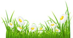 White Daisies and Grass Transparent PNG Clip Art Image
